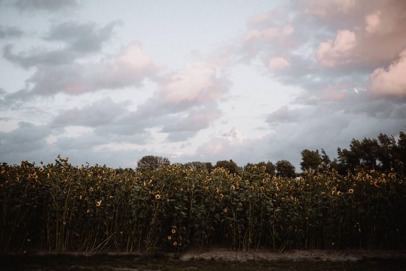 fotoshoot zonnebloemen sunset zonsondergang bruiloft domburg zeeland joran looij photography